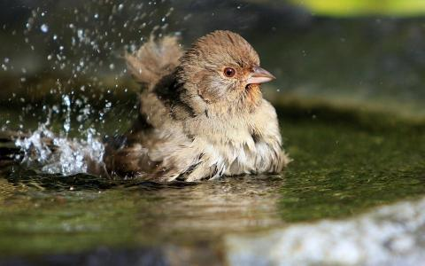Birds Drops Splash Water For Android壁纸